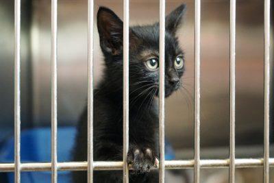 Co trzeba wiedzieć, kiedy chcesz zaadoptować kota ze schroniska